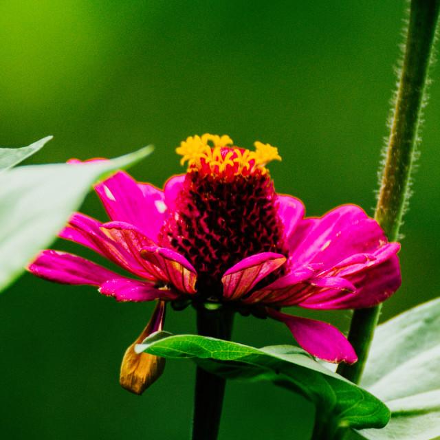 """Summerflower"" stock image"