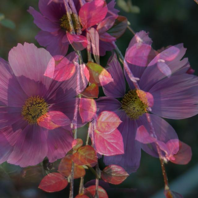 """""""Autumn flower"""" stock image"""
