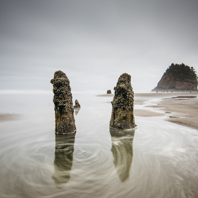 """""""Neskowin Ghost Forest"""" stock image"""