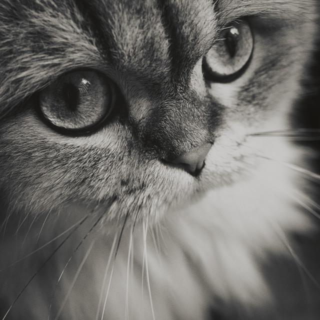 """Cat I"" stock image"