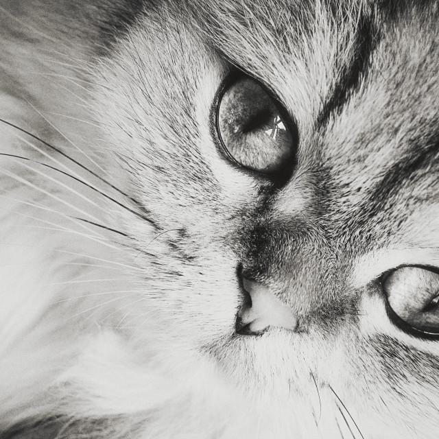 """Cat VIII"" stock image"