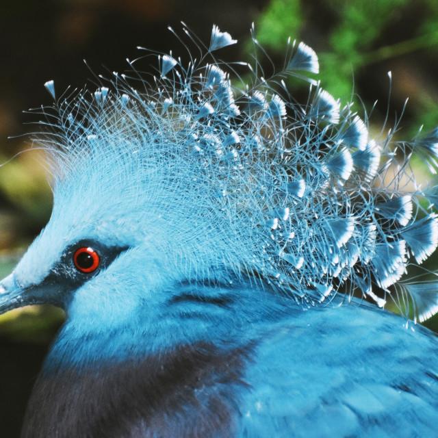 """Blue Exotic"" stock image"