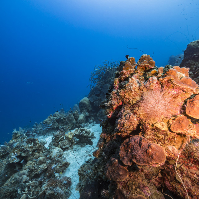 """""""Seascape in turquoise water of coral reef in Caribbean Sea / Curacao with fish, coral and sponge"""" stock image"""