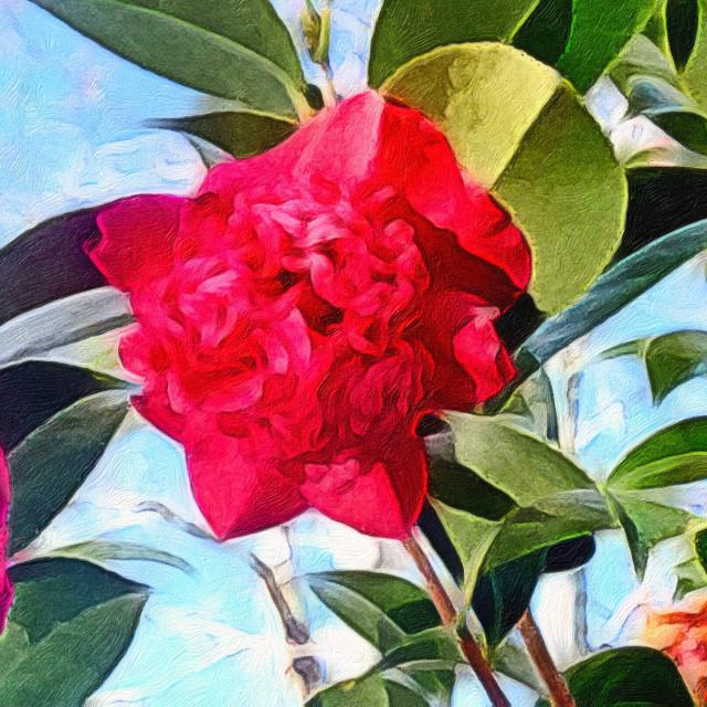 """Red Camellia PhotoArt"" stock image"