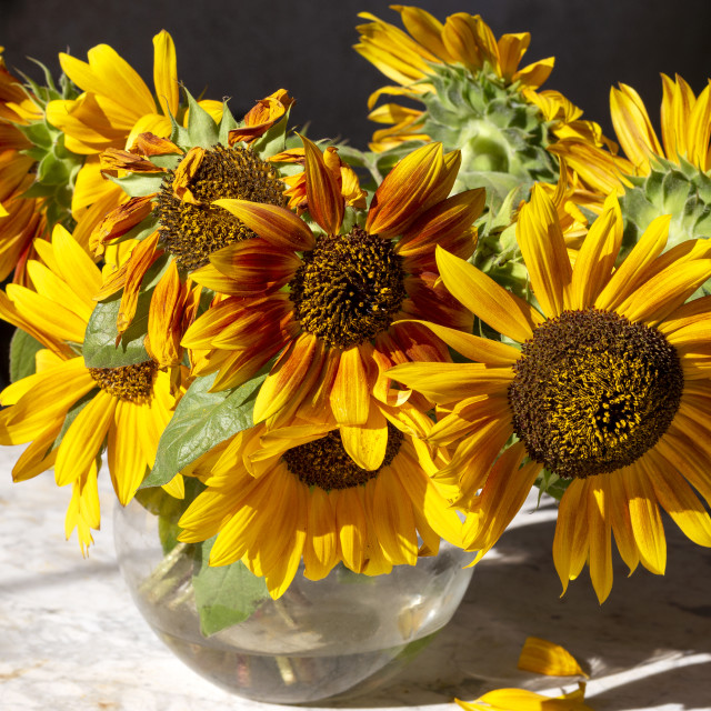 """Bunch of sunflowers in a vase"" stock image"