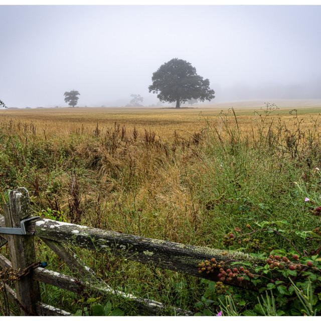 """Misty Morning Countryside"" stock image"