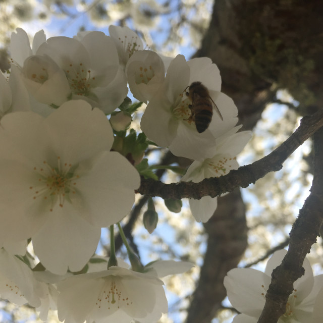 """""""The Budding Wasp"""" stock image"""