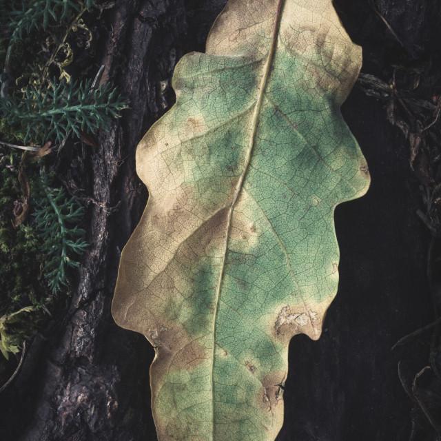 """Pathways (Dry Leaf)"" stock image"