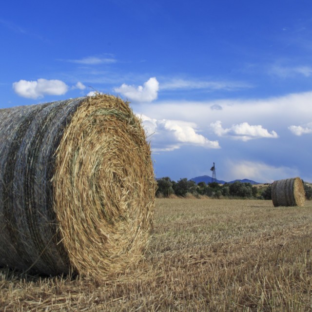 """""""Straw Bales On A Wheat Field"""" stock image"""