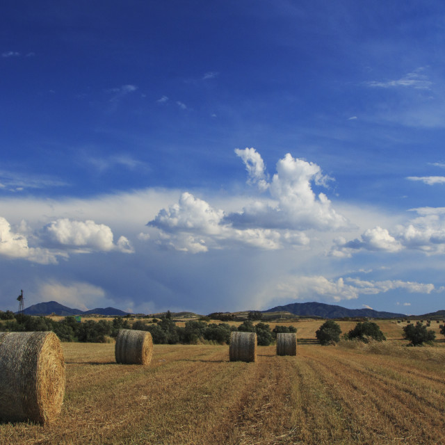 """""""Panoramic View Of Hay Bales On Autumn"""" stock image"""
