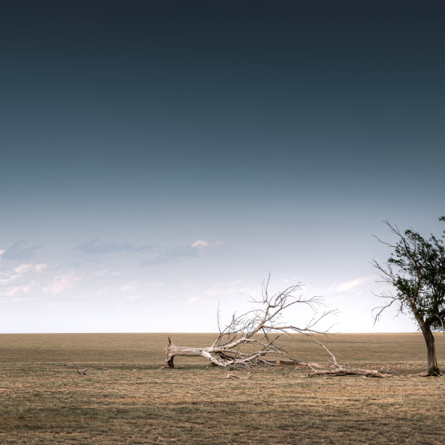 """Lone Tree on the Plains"" stock image"