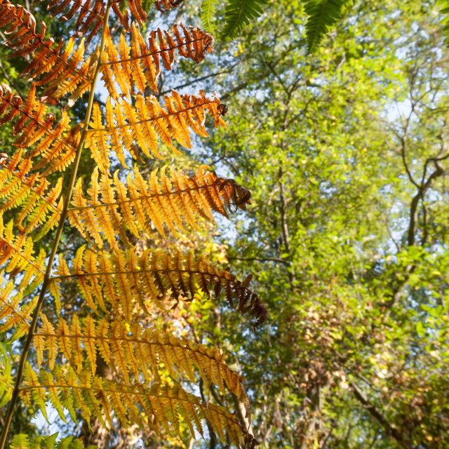 """background of autumnal fern leaf vegetation"" stock image"
