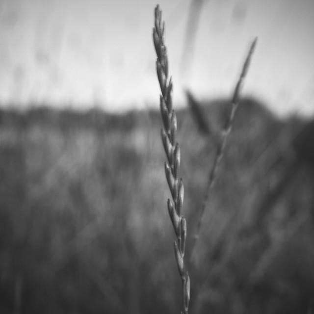 """""""Meadow VI (Hay)"""" stock image"""