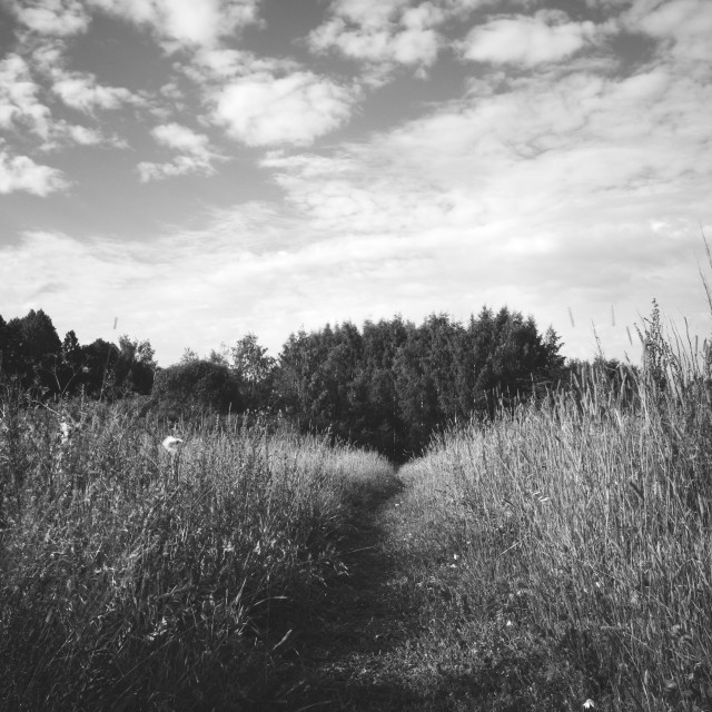 """Meadow XVIII (Path)"" stock image"