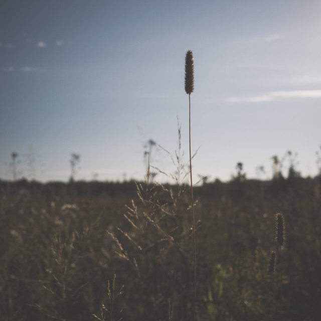"""""""Meadow XVI (Hay)"""" stock image"""