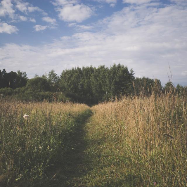 """Meadow XVII (Path)"" stock image"