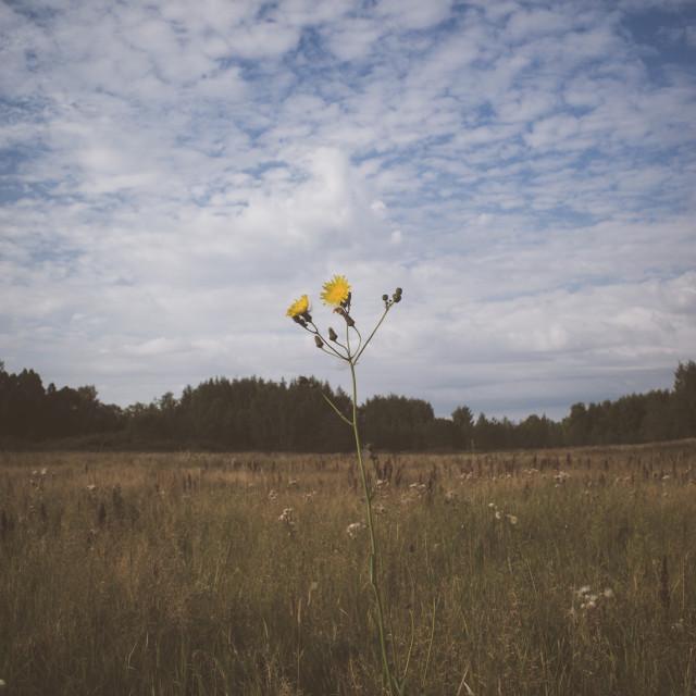 """Meadow XXII (Flower)"" stock image"