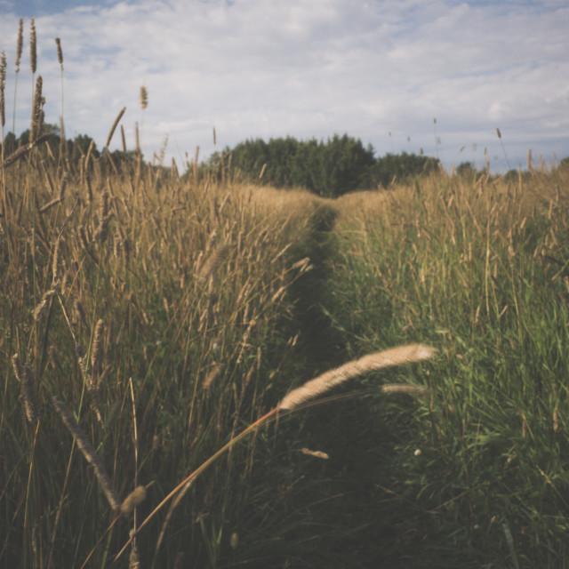 """Meadow XXI (Path)"" stock image"