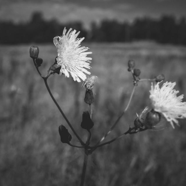 """""""Meadow XXXII (Flower)"""" stock image"""
