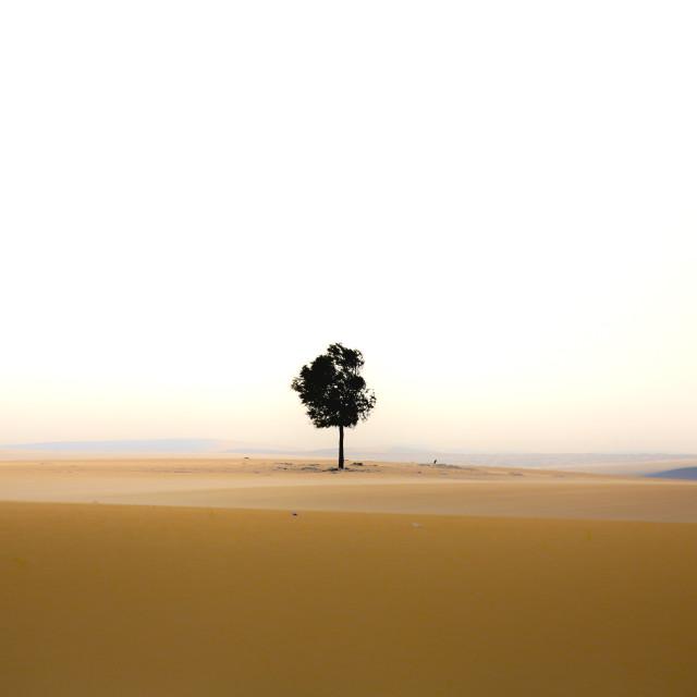 """A tree"" stock image"