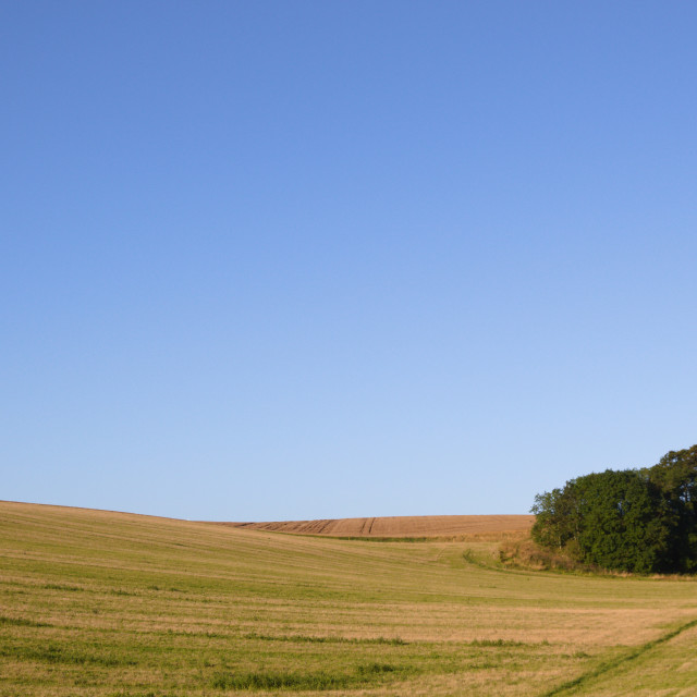 """Lincolnshire Wolds, UK, grassy field with a copse."" stock image"