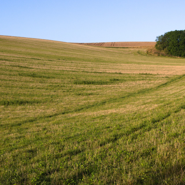 """""""Lincolnshire Wolds, UK, grassy field with a copse."""" stock image"""