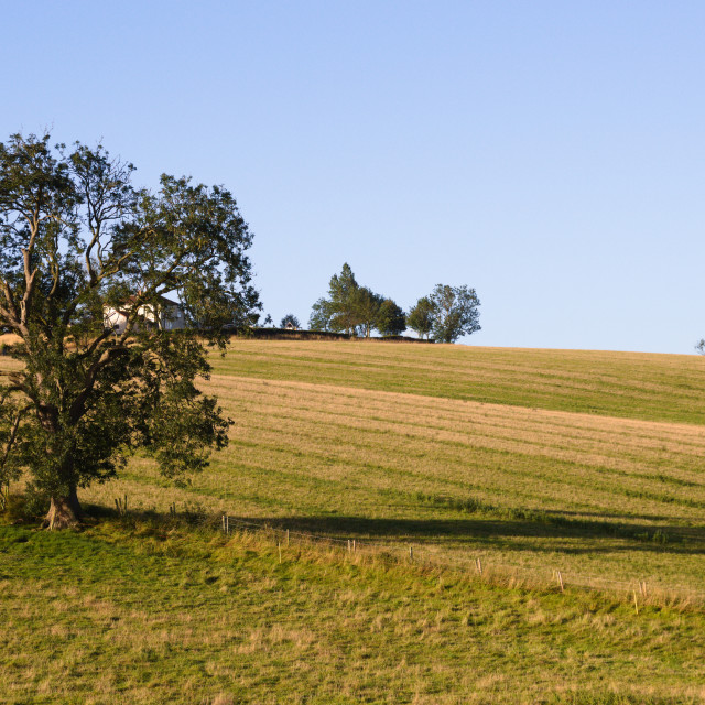 """Lincolnshire Wolds, UK, tree in a field."" stock image"