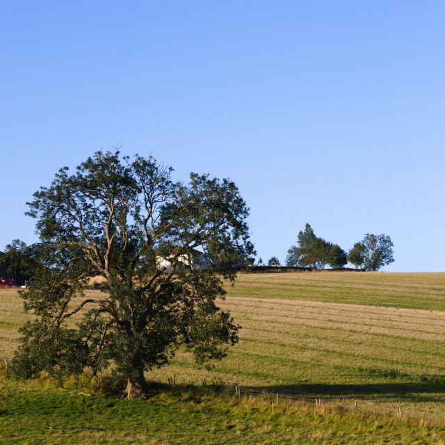 """""""Lincolnshire Wolds, UK, tree in a field."""" stock image"""