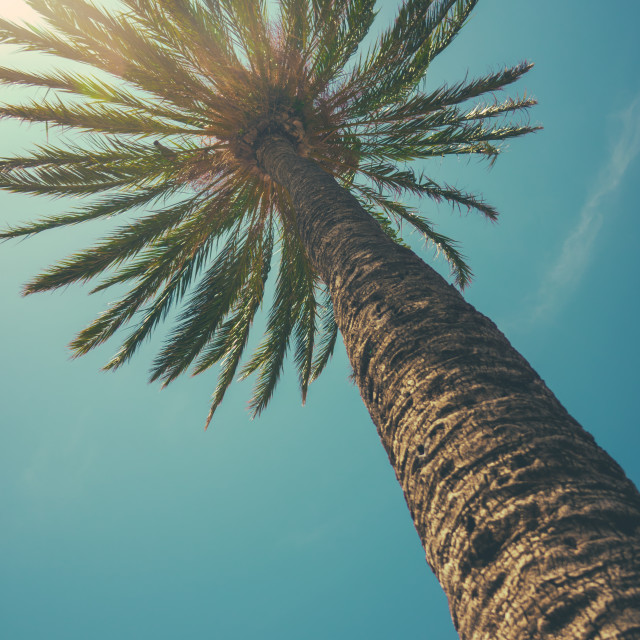 """View Up Towards Tropical Palm Tree"" stock image"