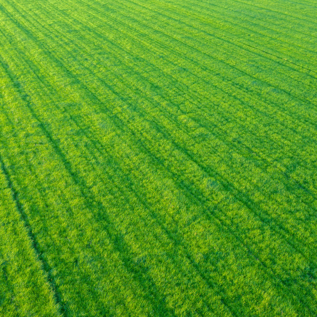 """Rows Of Crops From The Air"" stock image"