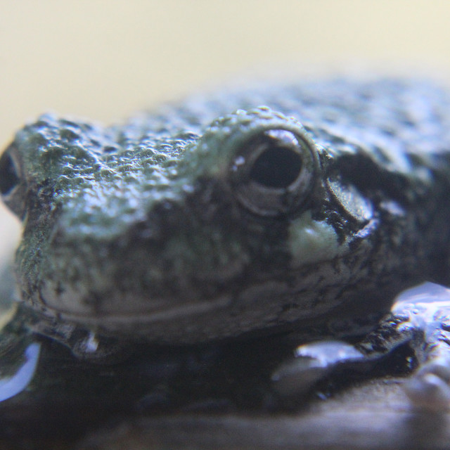"""frog eyes"" stock image"