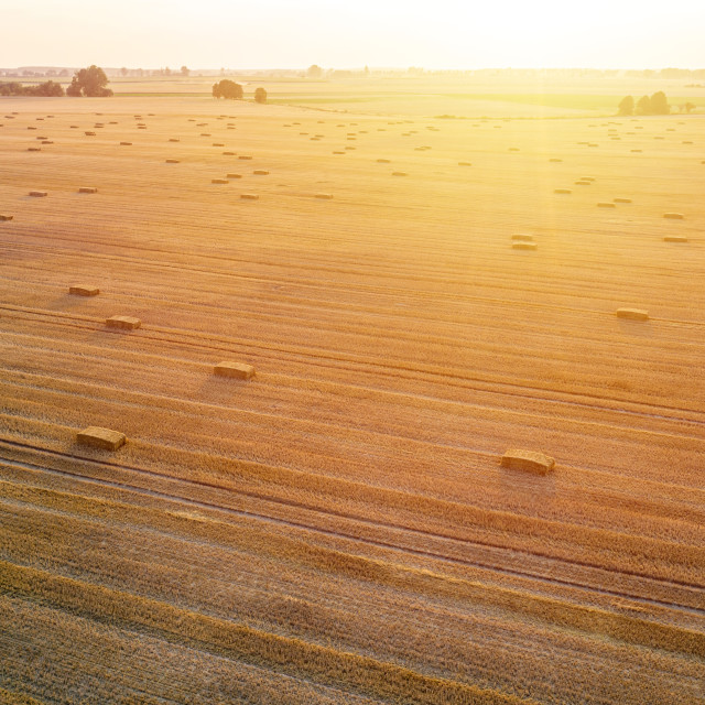 """""""Aerial view of rectangle hay bales on stubble at sunset, harvesting time"""" stock image"""
