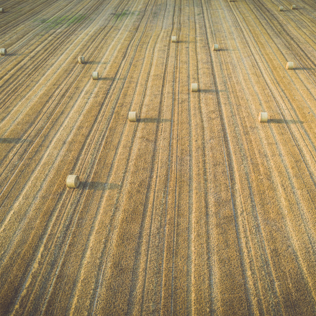 """""""Aerial view of round hay bales on stubble, harvesting time"""" stock image"""