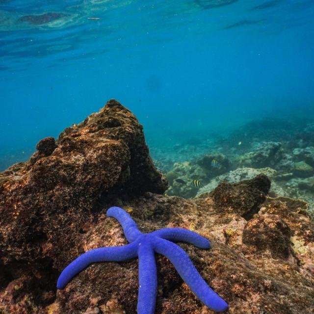 """Blue starfish below the waves off Nusa Penida"" stock image"