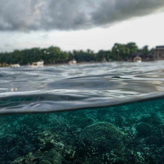 """""""Reef below the waves of Nusa Penida, Indonesia"""" stock image"""