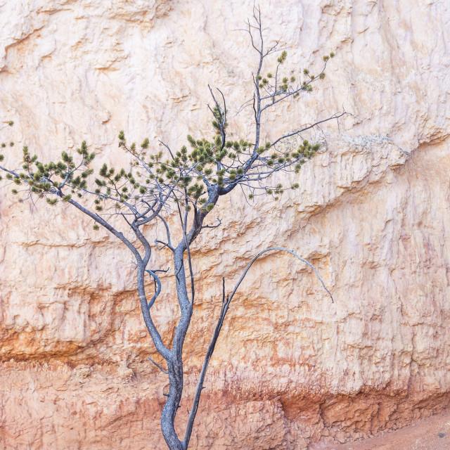 """""""Desert Portrait"""" stock image"""