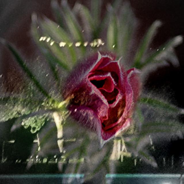 """""""Kefalonia spring"""" stock image"""