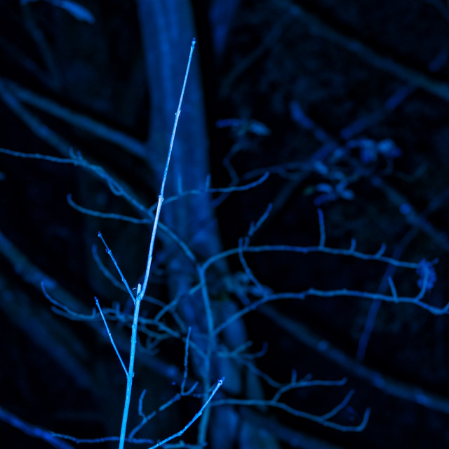 """Meaning Project - Abstract Art - Blue Branches - 7 Acres, Bolton, UK"" stock image"