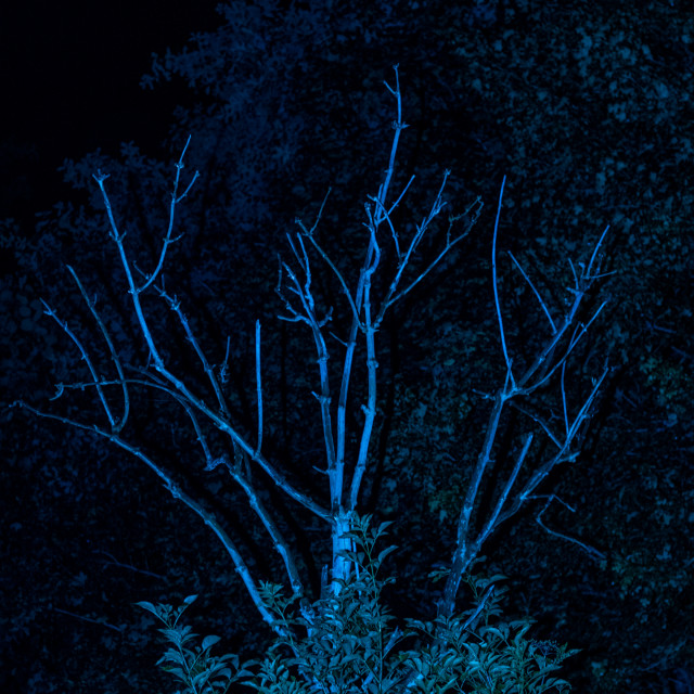 """Meaning Project - Abstract Art - Blue Tree - 7 Acres, Bolton, UK"" stock image"