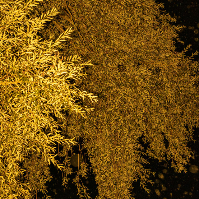 """Meaning Project - Abstract Art - Yellow Trees - 7 Acres, Bolton, UK"" stock image"