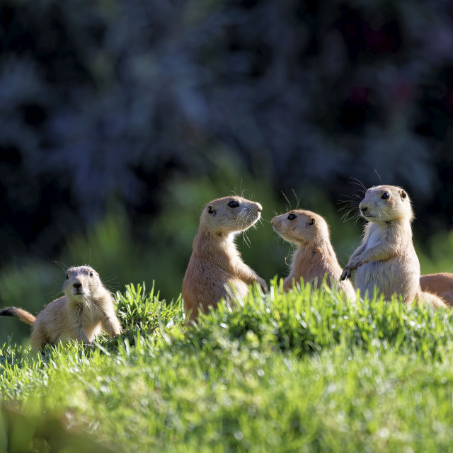"""A company of chipmunks living its best life..."" stock image"