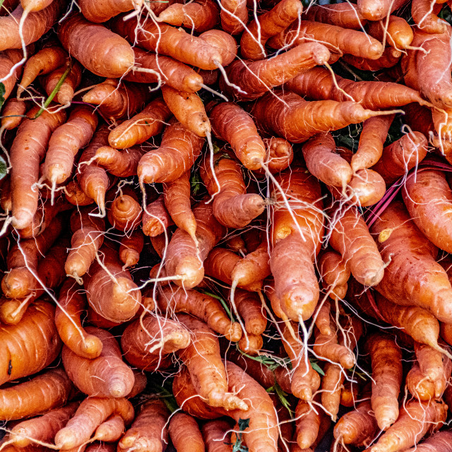 """Carrots"" stock image"