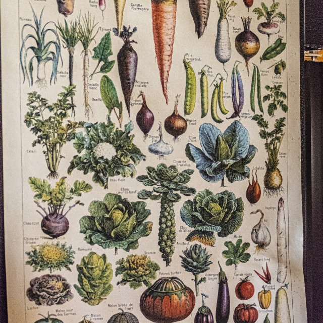 """Vegetable Poster"" stock image"