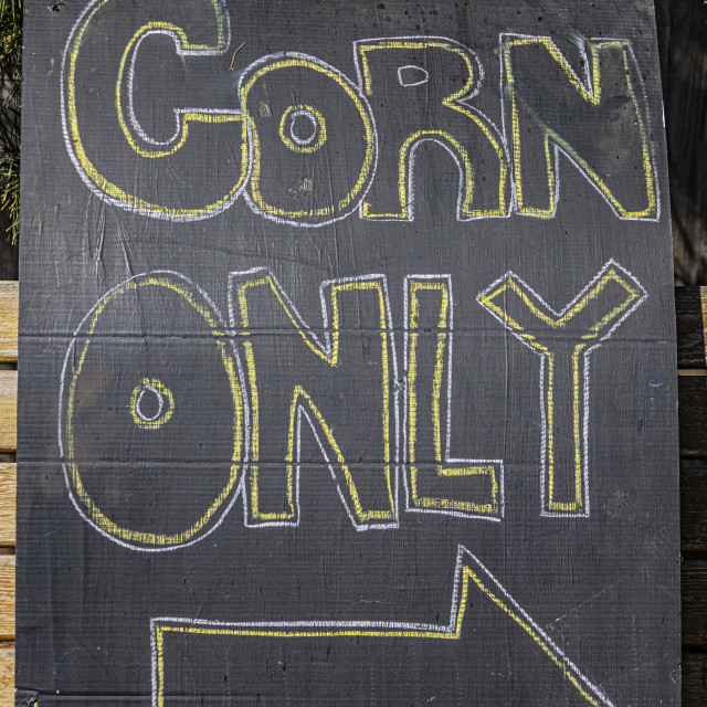 """Corn Only"" stock image"