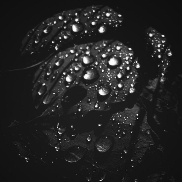 """Rain Drops Black And White I"" stock image"