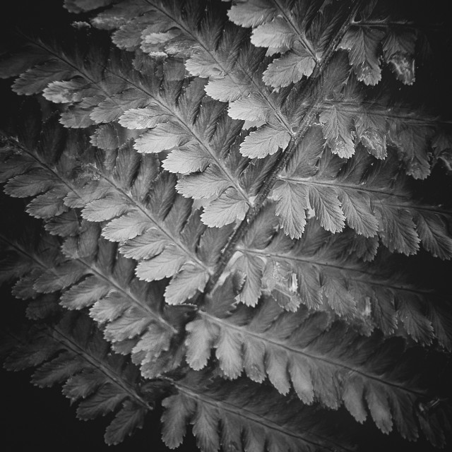 """""""Fern II (Structure)"""" stock image"""