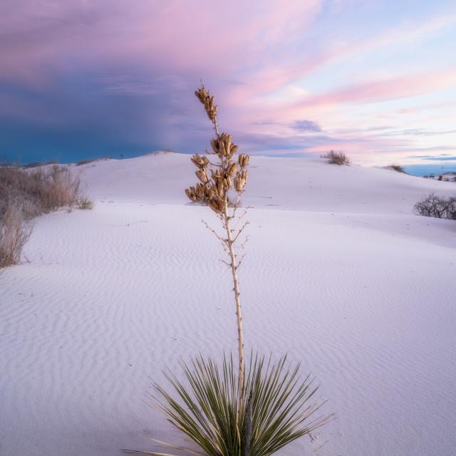 """New Mexico"" stock image"