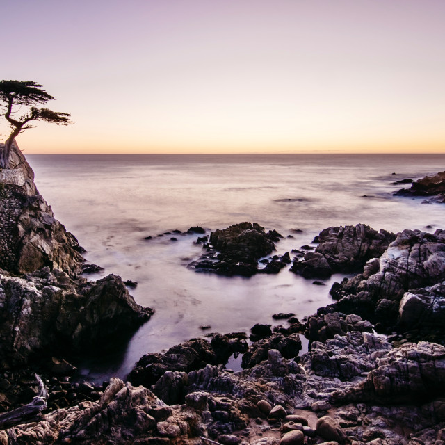 """""""The Lone Cypress"""" stock image"""