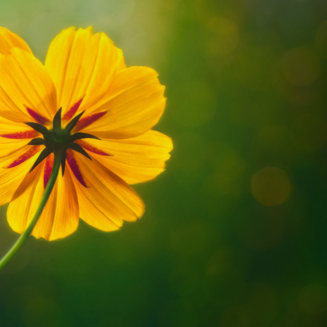 """Little Bit Sunshine"" stock image"
