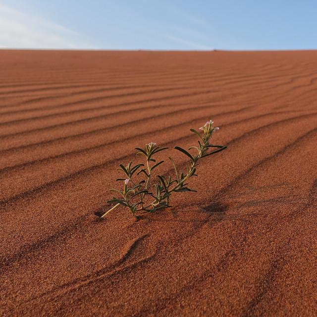 """""""Flower in the desert"""" stock image"""